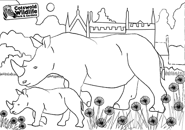 Rhino Colouring Fun