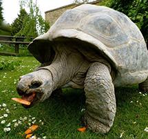Tortoise Encounter