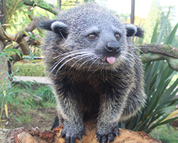 World Binturong Day