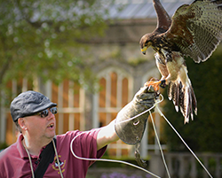 Birds of Prey demonstrations –  VE Bank holiday weekend