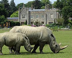 Rhino Month