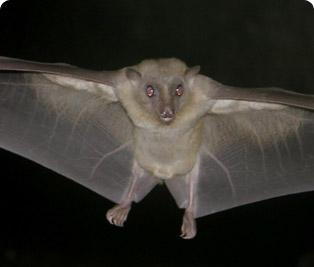 Fruit Bat Cotswold Wildlife Park And Gardens