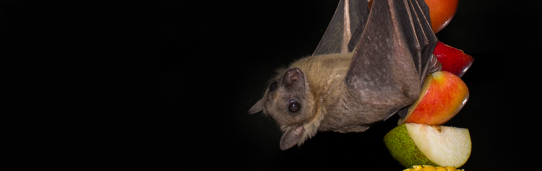 main-image-bats-1