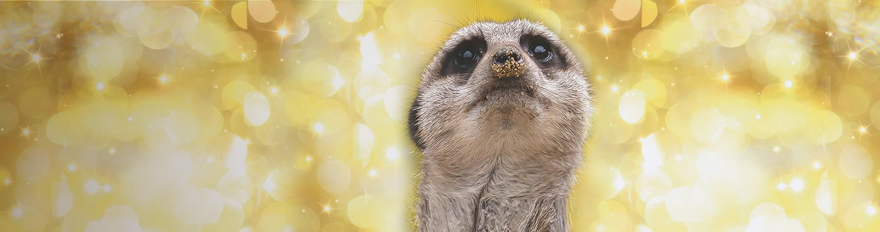 main-image-meerkats-christmas-1