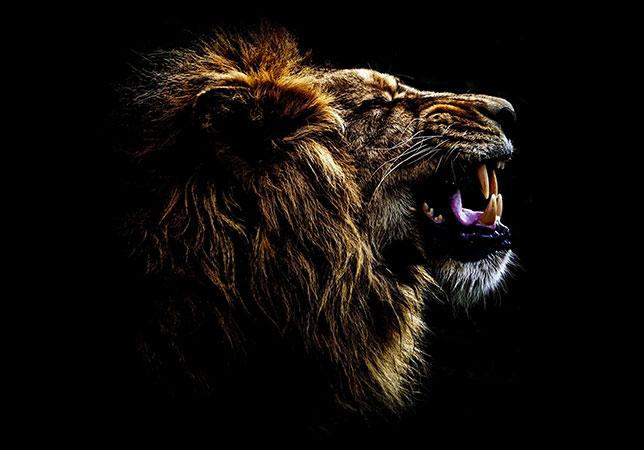 Marvellous Mammals (RUNNER-UP)