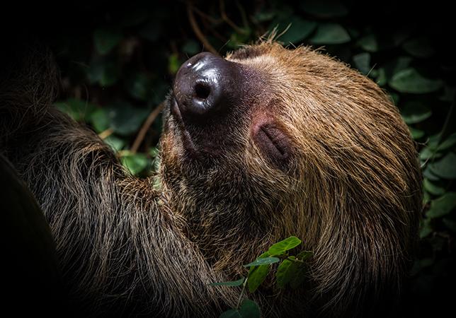 Stephen Cole – Sleepy Sloth (OVERALL WINNER)