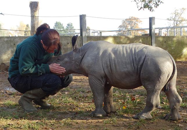 Belle the Rhino