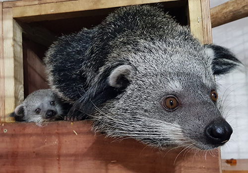 Coconut and Himala in nest box