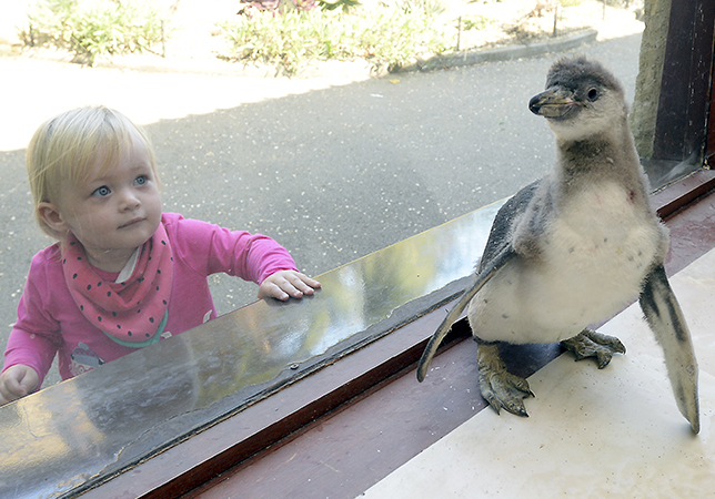 Marley the Penguin with 14-month-old onlooker Betty