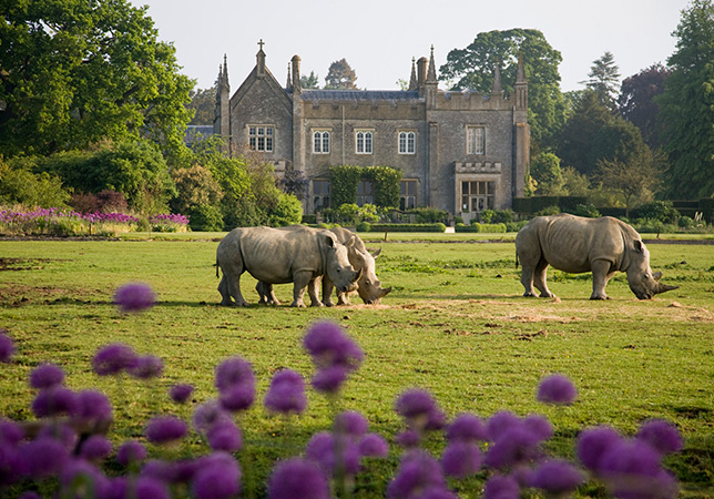 Rhino on the Lawn